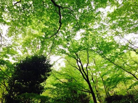 大山崎山荘美術館の新緑